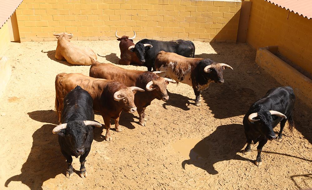 Sorteo de la 2ª de abono de la Feria del Caballo de Jerez 2015