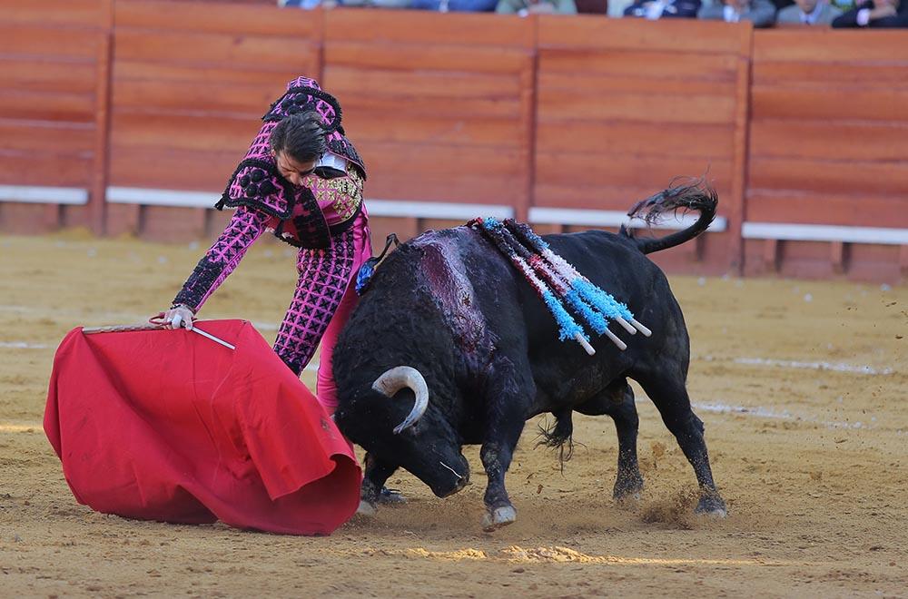 Descubrimiento del azulejo al toro premiado en la corrida concurso de ganaderías 2014